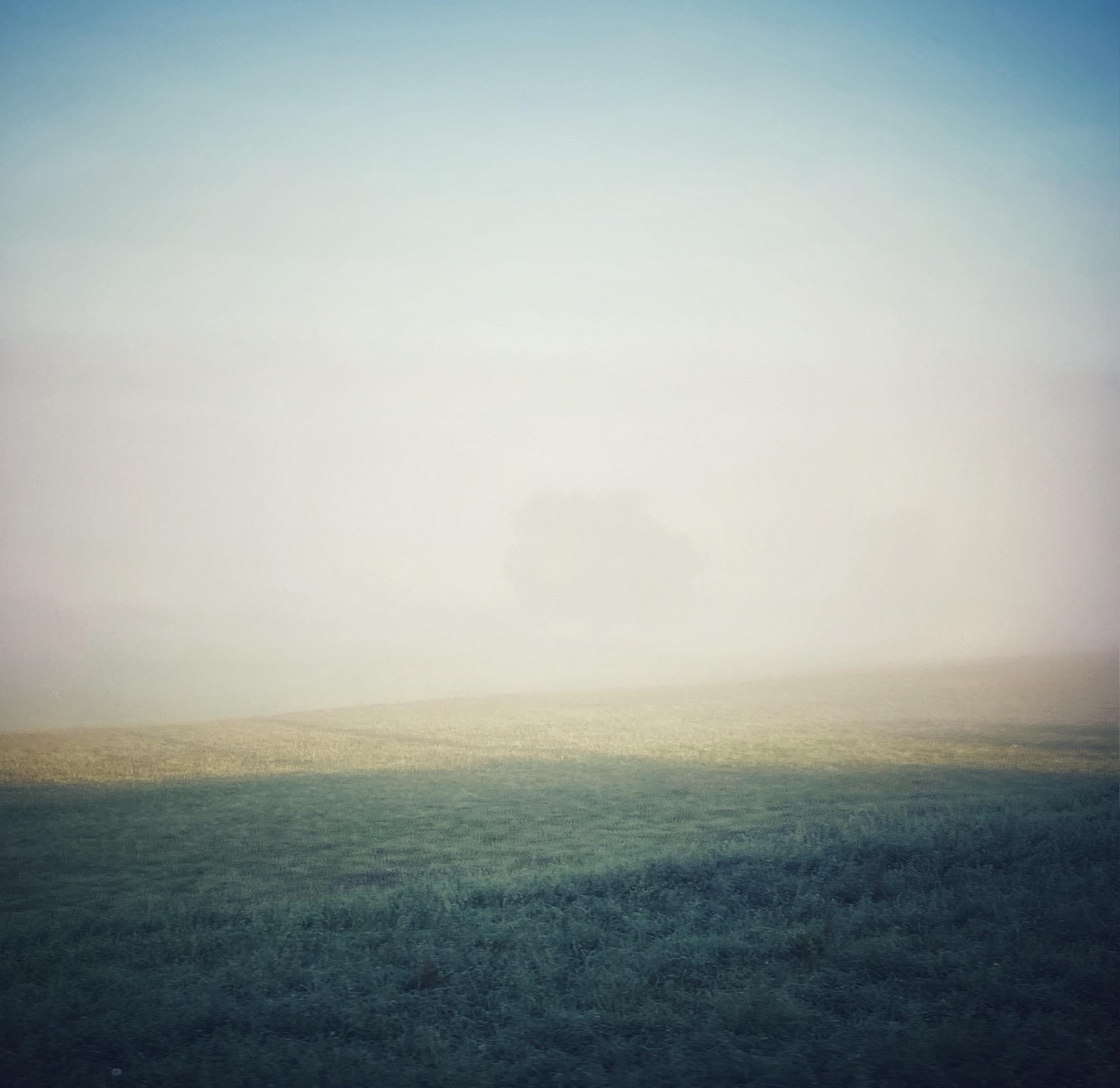 Un arbre qui se cache dans un brouillard délicieusement inondé de soleil